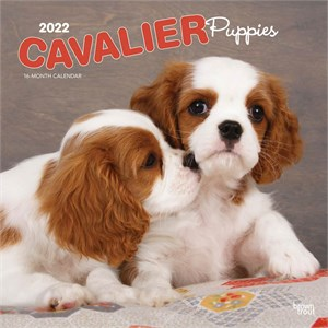 Cavalier King Charles Puppies Calendar 2015