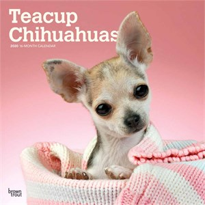 Tea Cup Chihuahua Calendar 2015