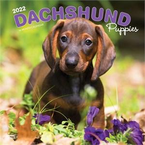 Dachshund Puppies Calendar 2015