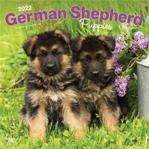 German Shepherd Puppies Calendar 2015