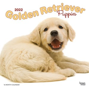 Golden Retriever Puppies Calendar 2015
