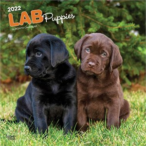 Labrador Retriever Puppies Calendar 2016