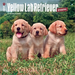 Yellow Lab Puppies Calendar 2014