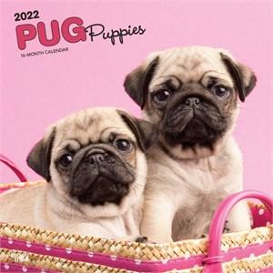 Pug Puppies Calendar 2015