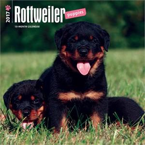 Rottweiler Puppies Calendar 2015