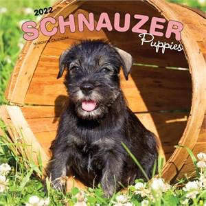 Schnauzer Puppies Calendar 2015