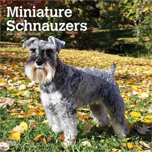 Miniature Schnauzer Calendar 2016