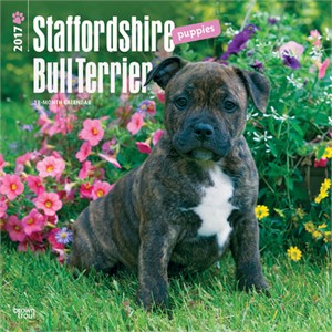 Staffordshire Bull Terrier Puppies Calendar 2014