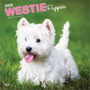 Westie Puppies Calendar 2016