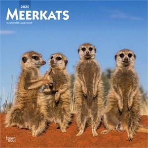 Meerkat Calendar 2015