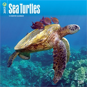 Sea Turtles Calendar 2014