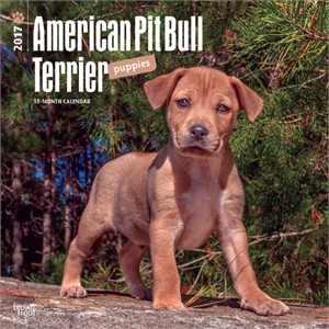 Pit Bull Terrier Puppies Calendar 2015