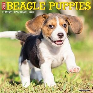 Beagle Puppies Calendar 2016