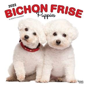 Bichon Frise Puppies Calendar 2015