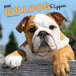 Bulldog Puppies Calendar 2015