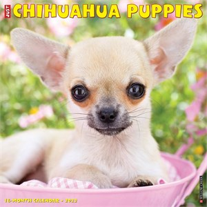 Chihuahua Puppies Calendar 2015
