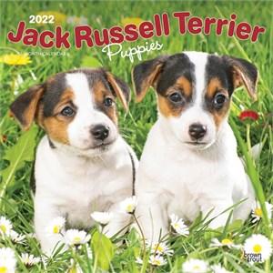 Jack Russell Terrier Puppies Calendar 2015
