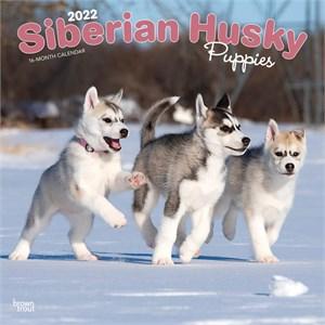 Siberian Husky Puppies Calendar 2015