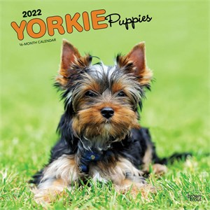Yorkshire Terrier Puppies Calendar 2014