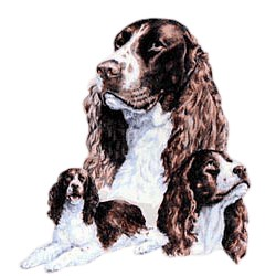 Springer Spaniel T-Shirt - Best Friends Portrait