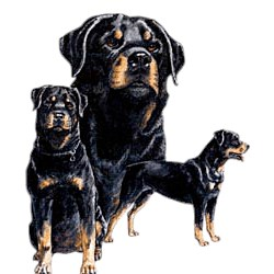 Rottweiler T-Shirt - Best Friends