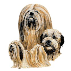 Lhasa Apso T-Shirt - Best Friends
