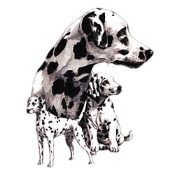 Dalmatian T-Shirt - Best Friends