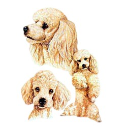 Apricot Poodle T-Shirt - Best Friends