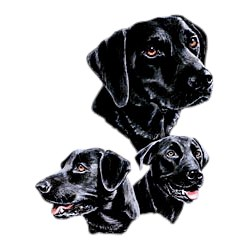 Black Lab T-Shirt - Best Friends
