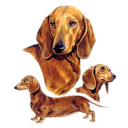 Dachshund T-Shirt - Best Friends
