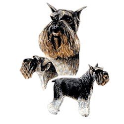 Schnauzer T-Shirt - Best Friends