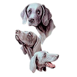 Weimaraner T-Shirt - Best Friends