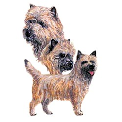 Cairn Terrier T-Shirt - Best Friends
