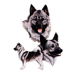 Norwegian Elkhound T-Shirt - Best Friends