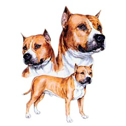 Pit Bull Terrier T-Shirt - Best Friends