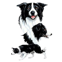 Border Collie T-Shirt - Best Friends