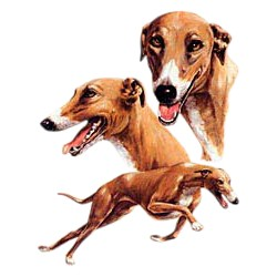 Greyhound T-Shirt - Best Friends