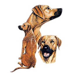 Rhodesian Ridgeback T-Shirt - Best Friends