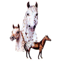 Appaloosa Horse T-Shirt - Best Friends