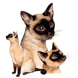 Siamese Cat T-Shirt - Best Friends