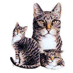 Tabby Cat T-Shirt - Best Friends Portrait Longhaired Gray