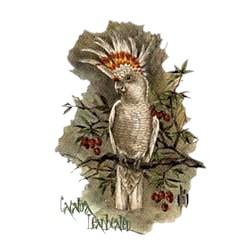 Leadbeater Cockatoo T-Shirt - Perched