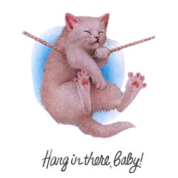 Cat T-Shirt - Hang in There