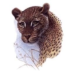 Leopard T-Shirt - Stunning