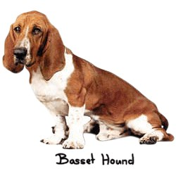 Basset Hound T-Shirt - Perfectly Portrayed