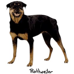 Rottweiler T-Shirt - Perfectly Portrayed