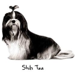 Shih Tzu T-Shirt - Perfectly Portrayed