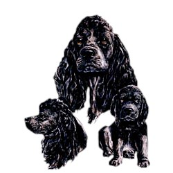 Black Cocker Spaniel T-Shirt - Best Friends