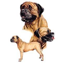 Bullmastiff T-Shirt - Best Friends
