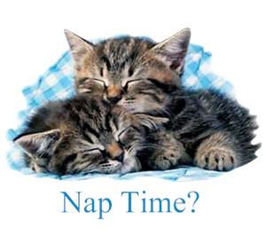 Cat T-Shirt - Nap Time